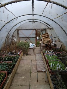 redhall_polytunnel